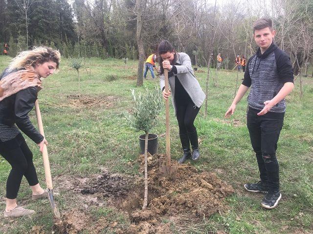Δενδροφύτευση στο πάρκο των Τιράνων - Mbjellja e pemëve në parkun e Tiranës
