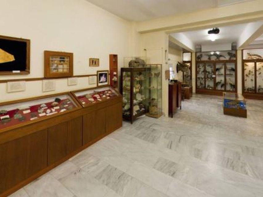 Παρουσίαση από το Μουσείο Φυσικής Ιστορίας των Αρσακείων Σχολείων