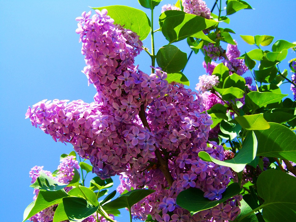 «Τα φυτά τού Πάσχα»