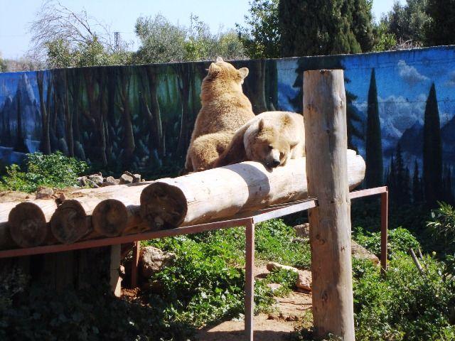 Επίσκεψη στο Αττικό Ζωολογικό Πάρκο