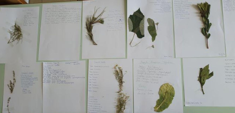 Δημιουργία σχολικού φυτολογίου