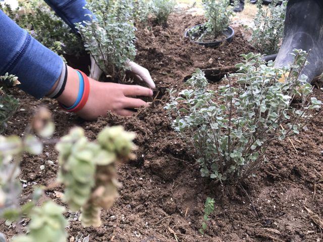 Φυτεύοντας αρωματικά φυτά στο Σχολείο